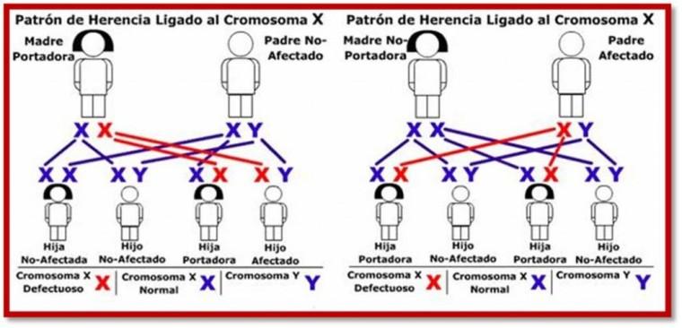 Patrón-de-herencia-1024x494